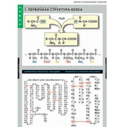 Таблицы Белки и нуклеиновые кислоты 8шт