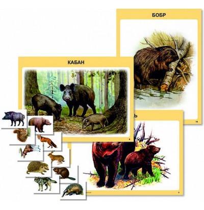 Таблицы Дикие животные