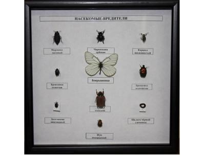 Коллекция Насекомые вредители